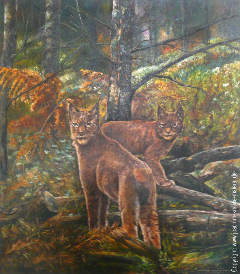 Luchs-Pärchen im Unterholz